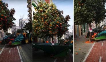 Video Demonstration Of An Orange Harvesting Machine In Valencia, Spain