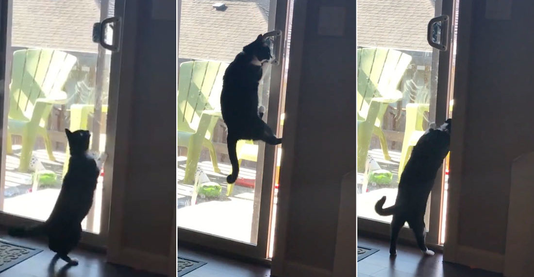 Ninjas Are Everywhere: Cat Opens Sliding Glass Door