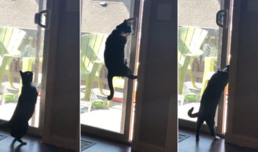 Ninjas Are Everywhere: Cat Opens Sliding Glass Door