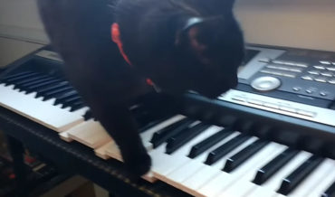 Black Cat Walking Across Keyboard Performs Horror Movie Soundtrack