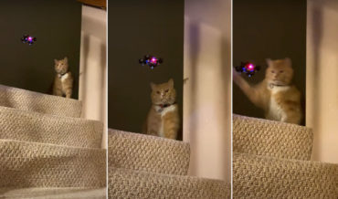 Not In My House!: Cat Takes Out Mini Drone