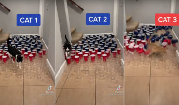 3 Different Cats Attempt To Navigating A Plastic Cup Minefield