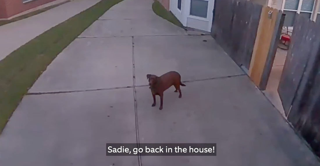 Man Uses Security Cam To Tell His Escaped, Barking Dog To Get Back In The House