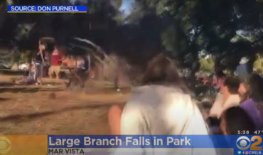 Giant Falling Tree Branch Almost Crushes Band During Park Concert