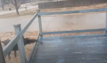 Dog Slides Across Frozen Deck, Manages To Land Relatively Graceful Dismount