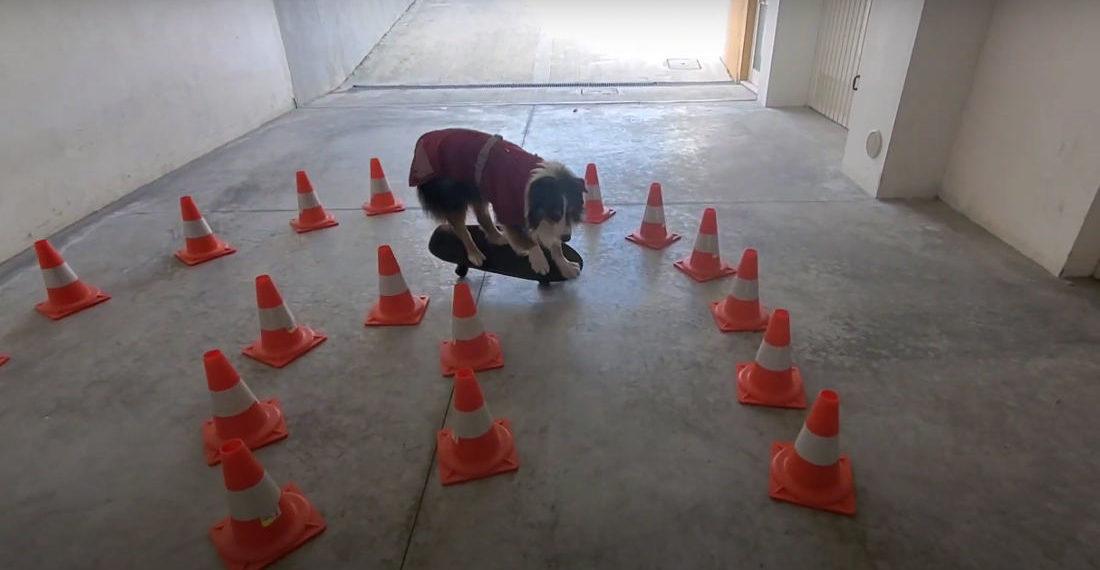 Mad Skills: Dog Leans On Skateboard To Navigate Tight U-Turn