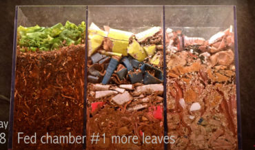 Mesmerizing 100-Day Timelapse Of Transparent Worm Composting Bin