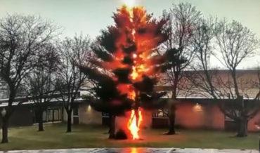 Damn: Video Of Lightning Bolt Disintegrating A Tree
