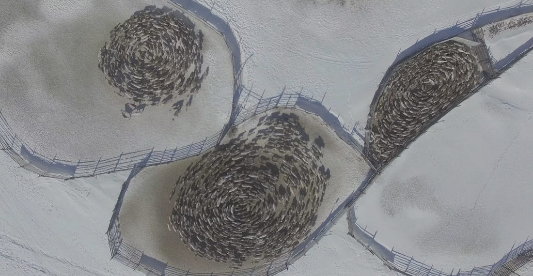 Drone Footage Of Spiraling Reindeer Cyclones