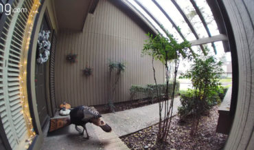 Man Uses Video Doorbell To Shoo Wild Turkey Away From Eating His Welcome Mat