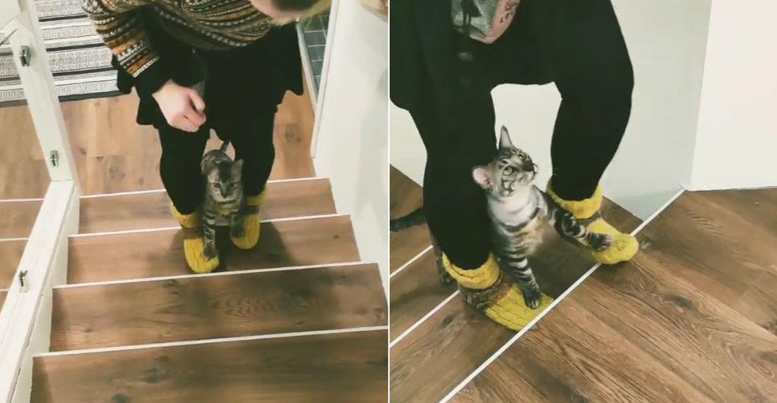Cat Walks Up Stairs On Human's Feet