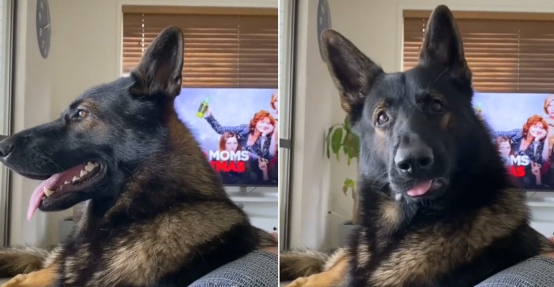 Ex-Drug Sniffing Dog Reacts To Hearing The Word 'Cocaine'