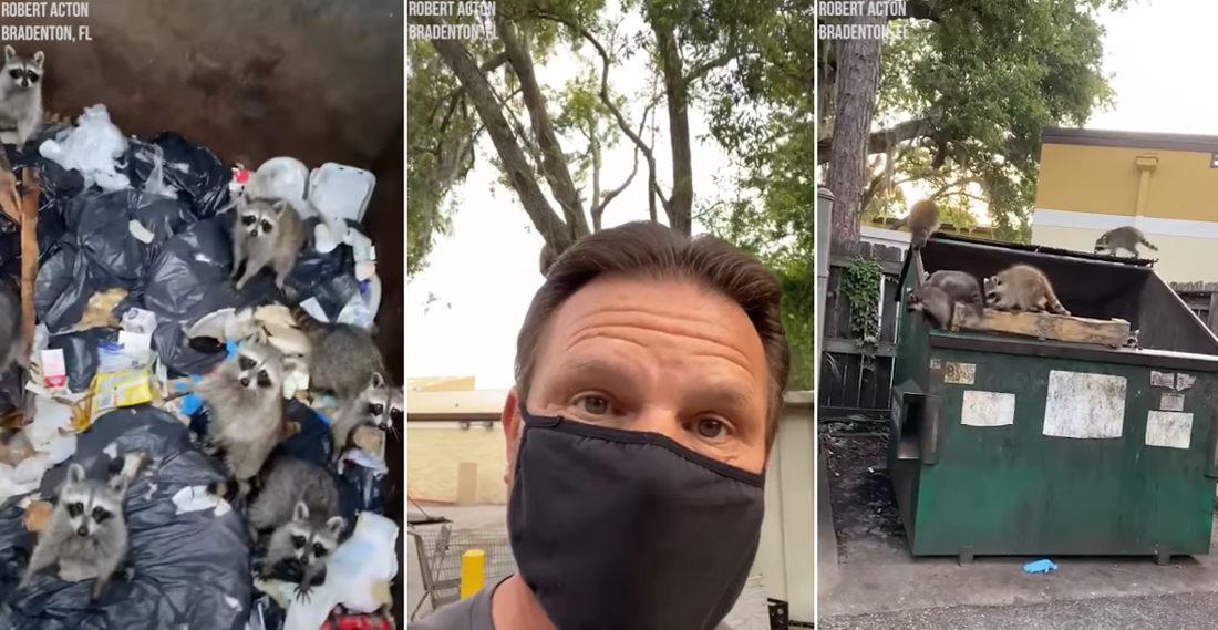Trash Panda Party!: Man Rescues Ten Raccoons Stuck In Dumpster