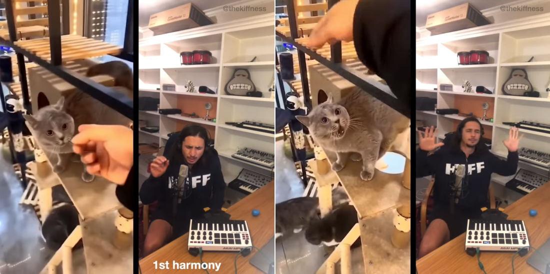 Man Remixes Talking Cat Into Enjoyable Song Collaboration