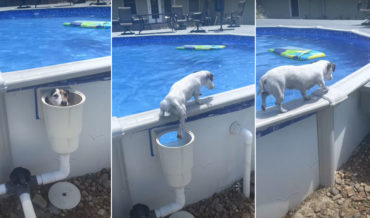 Dog's Clever Way Of Exiting Above-Ground Pool
