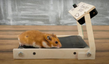 Man Builds Miniature Treadmills For His Hamsters