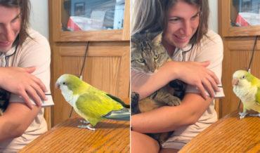 Bird Recites Tweety's 'I Tawt I Taw A Puddy Tat' In Front Of Cat