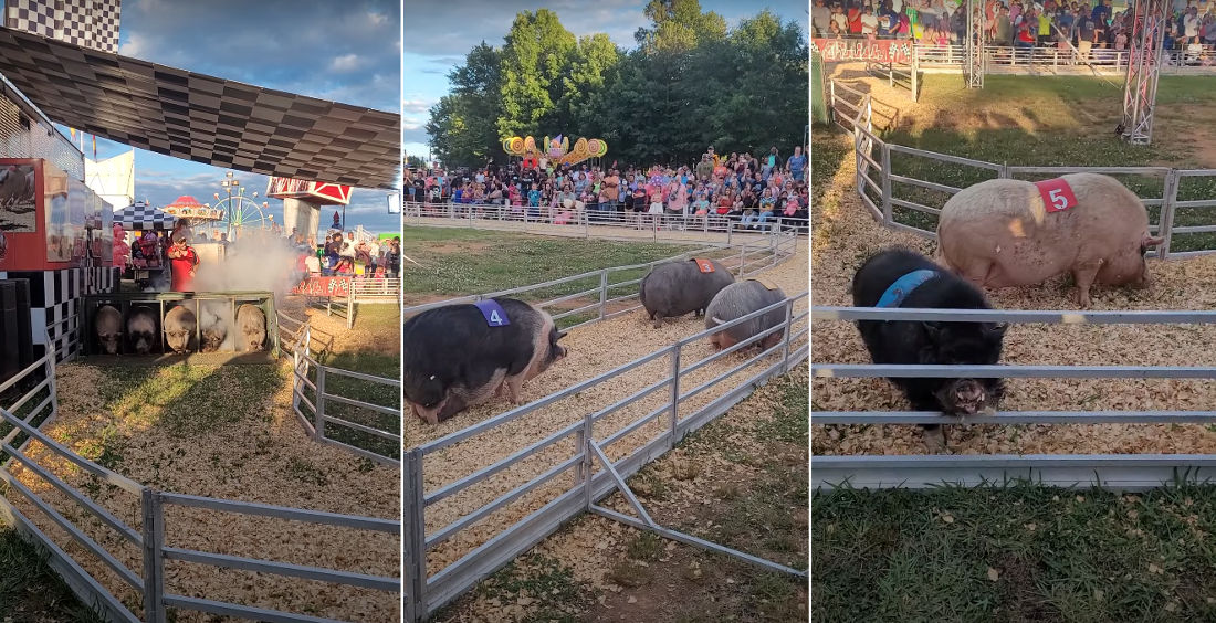Video Of Woman's First Southern Pig Race