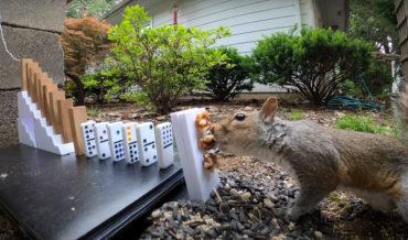Squirrel Starts Rube Goldberg Machine, Gets Rewarded With Nuts