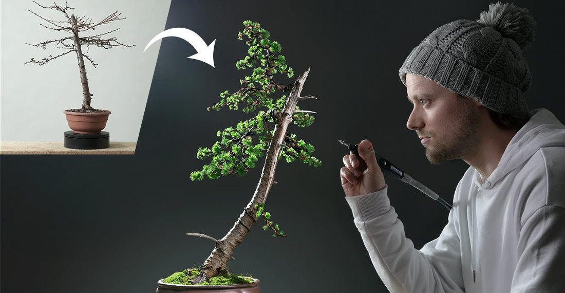 Training And Trimming A Bonsai Over The Course Of A Year