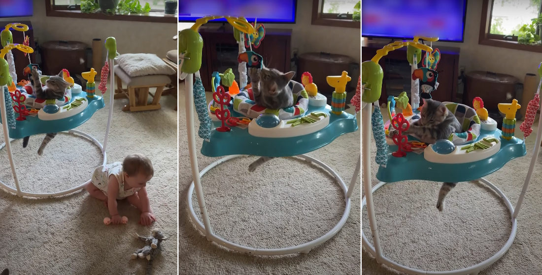 Kitten Has Time Of Its Life Playing In Baby Bouncer