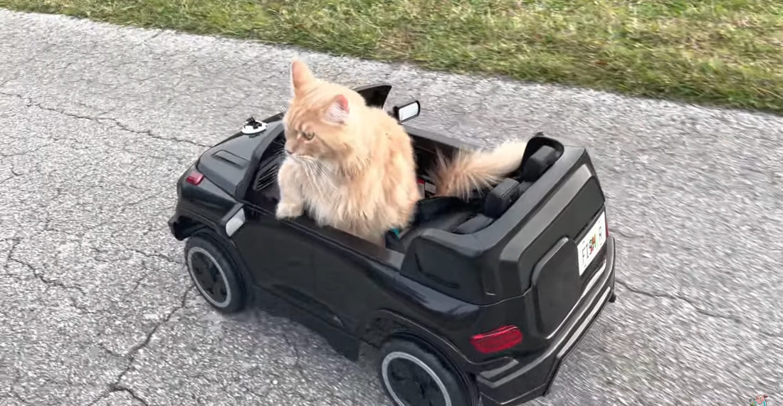 Must Be Nice: Cat Casually Cruising In His R/C Truck