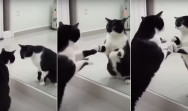 Cat Has Existential Crisis In Mirror (With Twist Ending!)