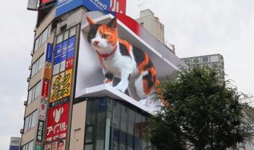 Giant Cat Optical Illusion On Digital Billboard