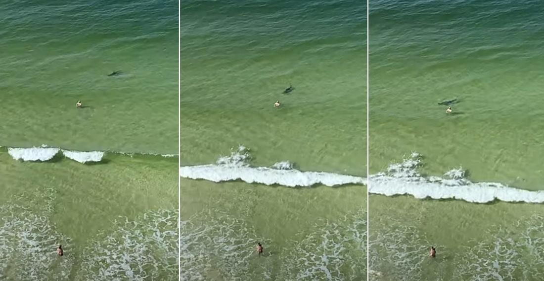 Yikes: Hammerhead Shark Beelines It Toward Beachgoer While Chasing Fish