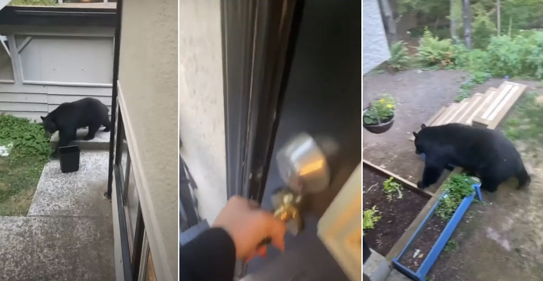 Woman Locked Out Of House While Large Bear Passes By