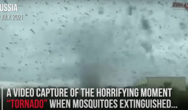 Oh, You Know, Just A Massive Mosquito Tornado In Russia