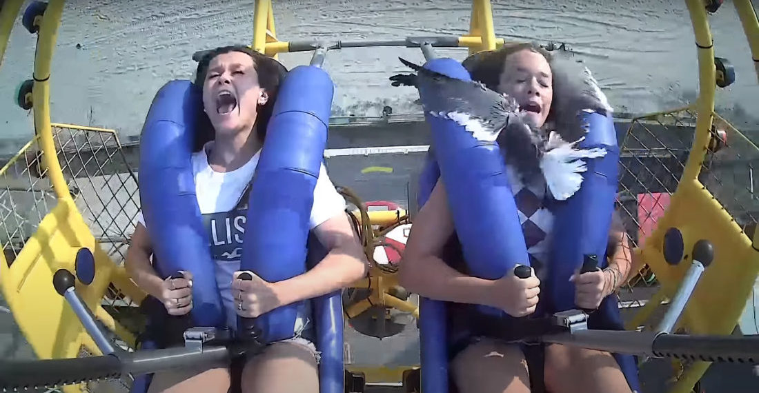 Girl Hits Seagull With Face During Sling Shot Ride At New Jersey Beach