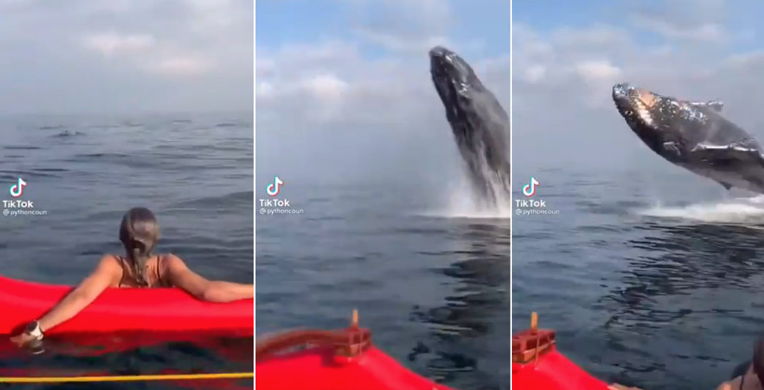 Whale Watchers In Kayaks Get The Surprise Of Their Lives