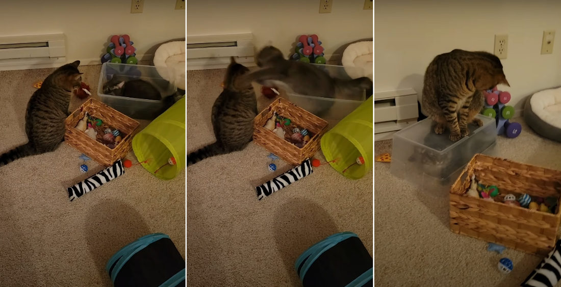 Failed Cat Attack Results In Instant Karma, Kitty Trapped Under Bin