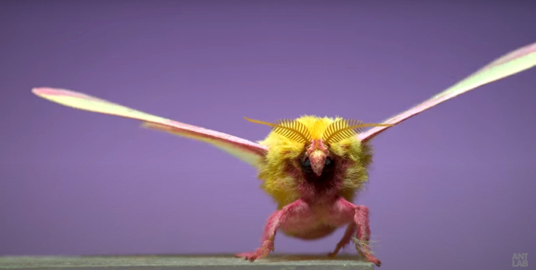 Up Up And Awaaaaay: Moths Taking Off In Super Slow Motion