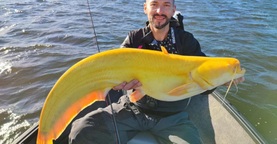 Fisherman Catches Rare All-Yellow Leucistic Catfish
