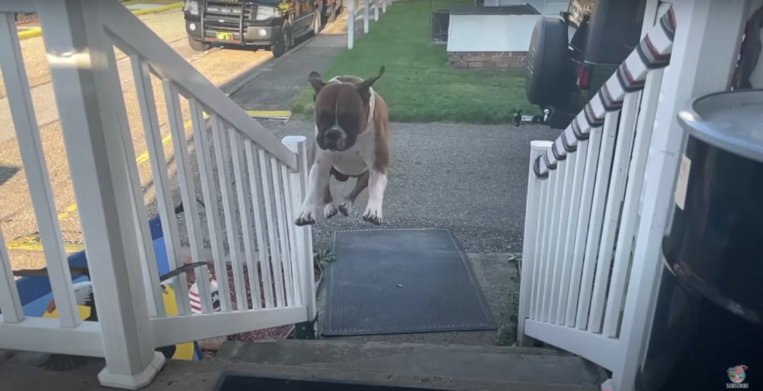 Slow-Motion Video Of Dog Leaping Up Stairs In Single Bound