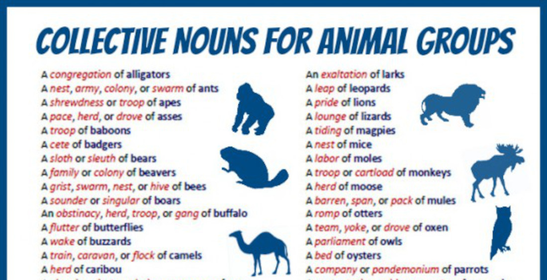 Valuable Info: Collective Nouns For Animal Groups