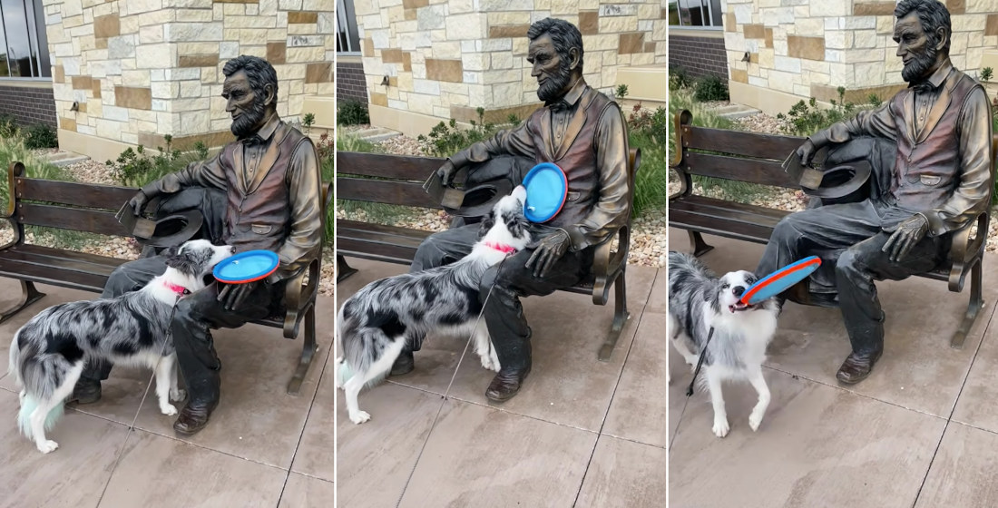 Awww: Dog Tries To Get Abraham Lincoln Statue To Throw Its Frisbee