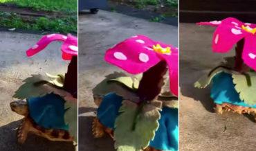 Pet Tortoise Shows Off Its Venusaur Pokemon Costume